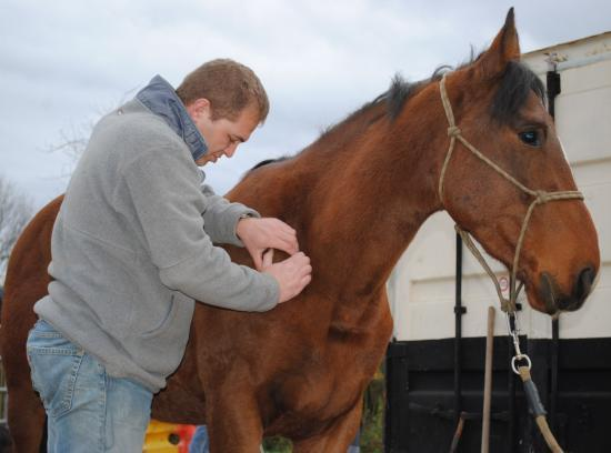 ostéopathe chevaux