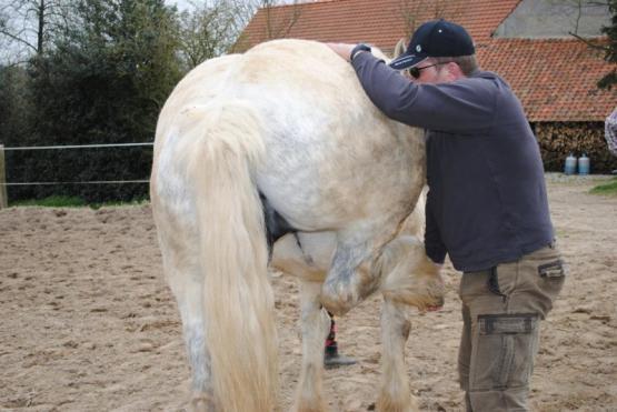 séance ostéopathie cheval